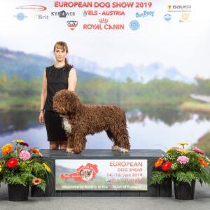 Dog show - spanish water dog